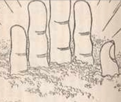 お釈迦様の手のひら.jpg