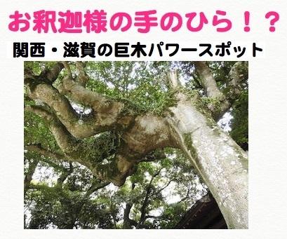 お釈迦様の手のひらのような珍しい巨木.jpg